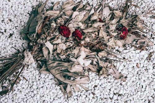 Trockenes Bouquet Mit Verwelkten Rosen Auf Steinigem Boden