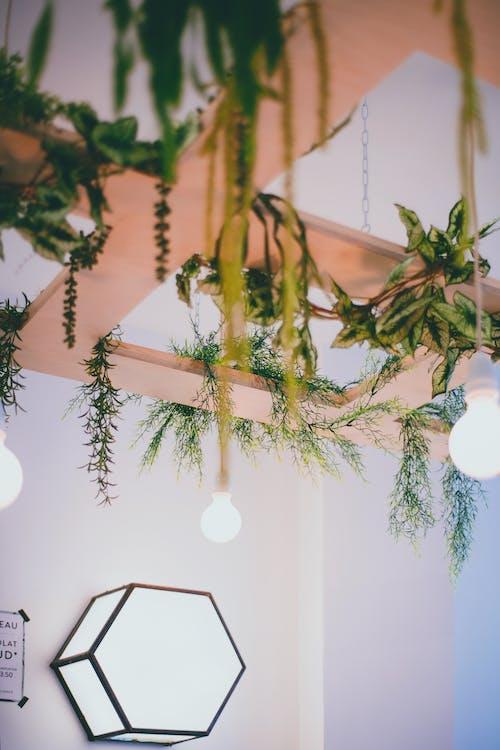 天井に植物のある居心地の良い部屋のインテリア