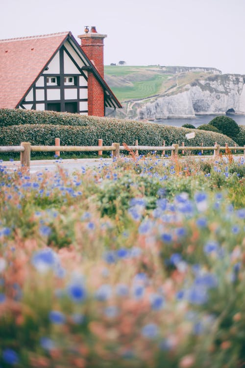Flowers growing against cottage in countryside