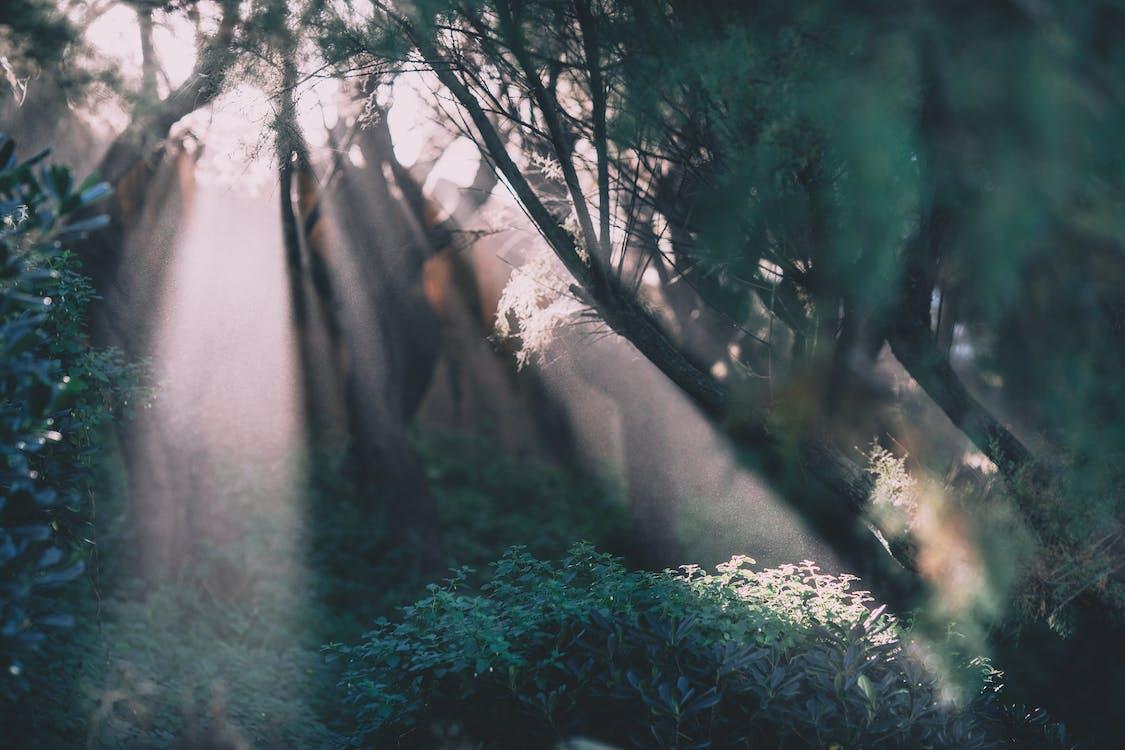 Bosque De Verano Con Arbustos Verdes Y Rayos De Sol.