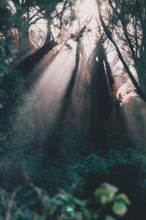Imagine de stoc gratuită din arbore, arbust, armonios