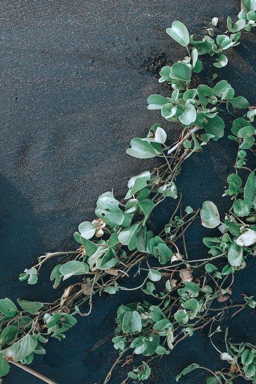 คลังภาพถ่ายฟรี ของ กลางวัน, กลางแจ้ง, ก้านดอก, การปีน
