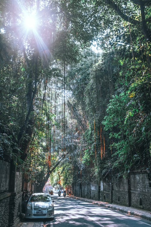 Narrow asphalt road between concrete walls with riding motorcycles under tropical lush trees with vines at sunshine