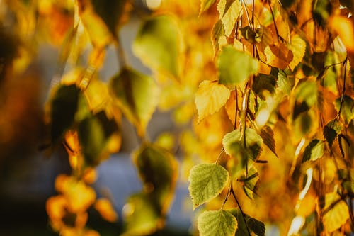 Bright autumn leaves on tree twigs