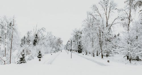 Snowy trees growing along alley in park