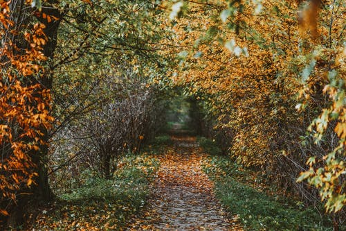 Path through autumn trees with dry leaves