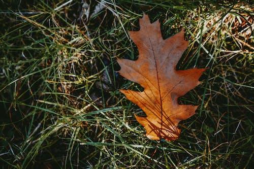 akçaağaç, alan, arazi içeren Ücretsiz stok fotoğraf