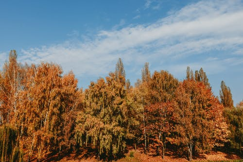 Autumn trees in forest in countryside