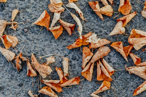 Autumn dry leaves on asphalt surface