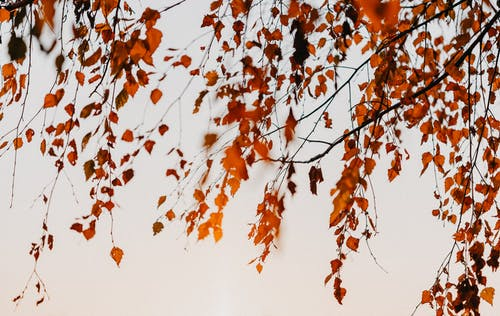 Autumn leaves on tree branches in cloudy day