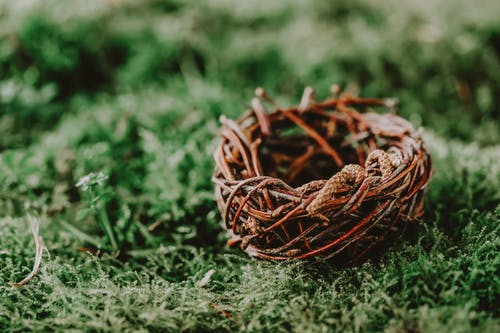 Decorative handmade nest with wavy twigs on green plants in daylight on blurred background