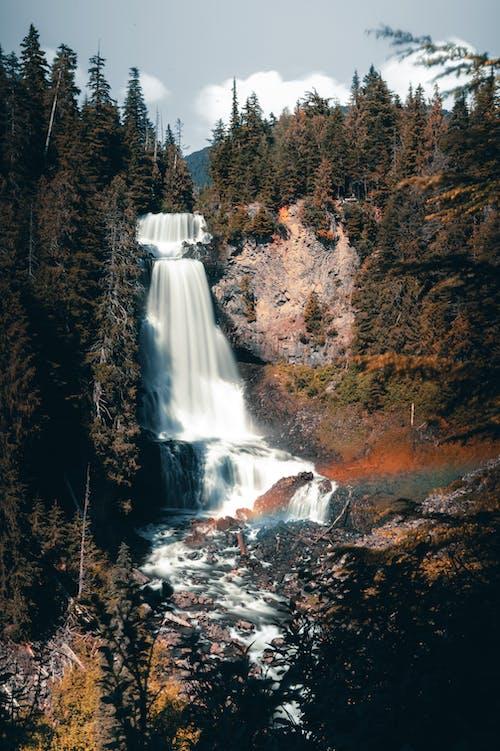 Immagine gratuita di acqua, albero, altezza