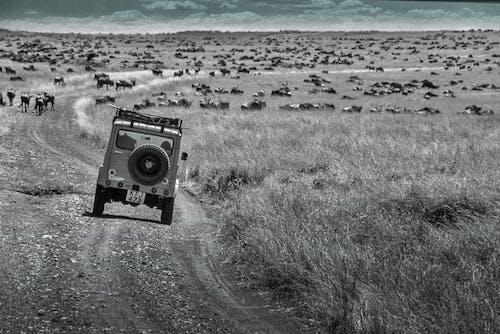 Free stock photo of b&w, Kenya, mara, Masai Mara