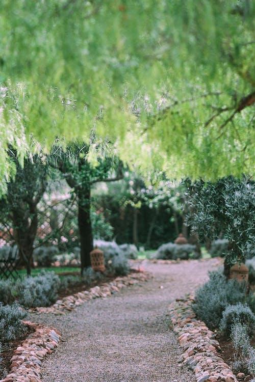 Footpath in green garden with lush vegetation
