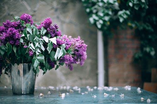 Blooming flowers in metal bucket