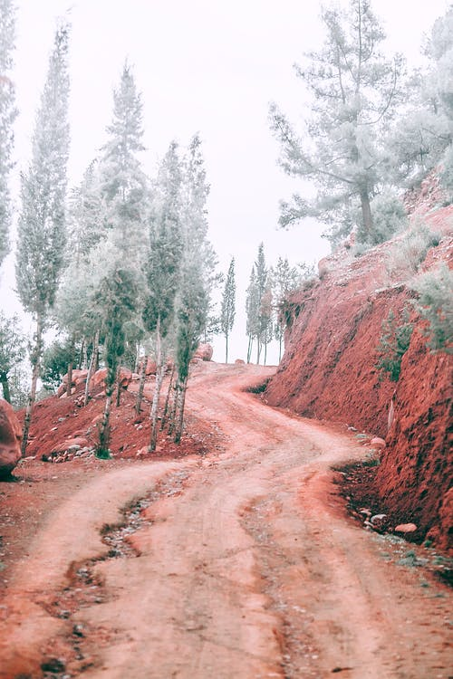 Narrow curved road going among red rocky formations with coniferous trees covered with snow in nature against cloudless sky on winter day