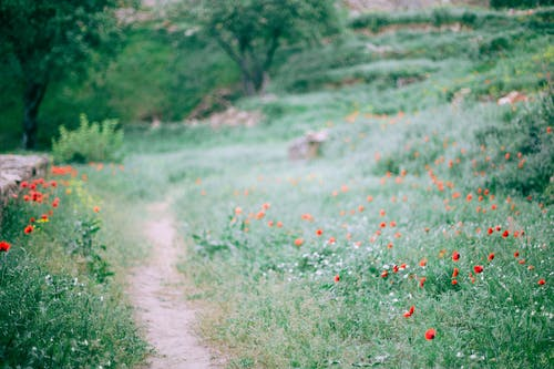 Narrow path among grassy glade with small red flowers growing in forest in nature on summer day with blurred background