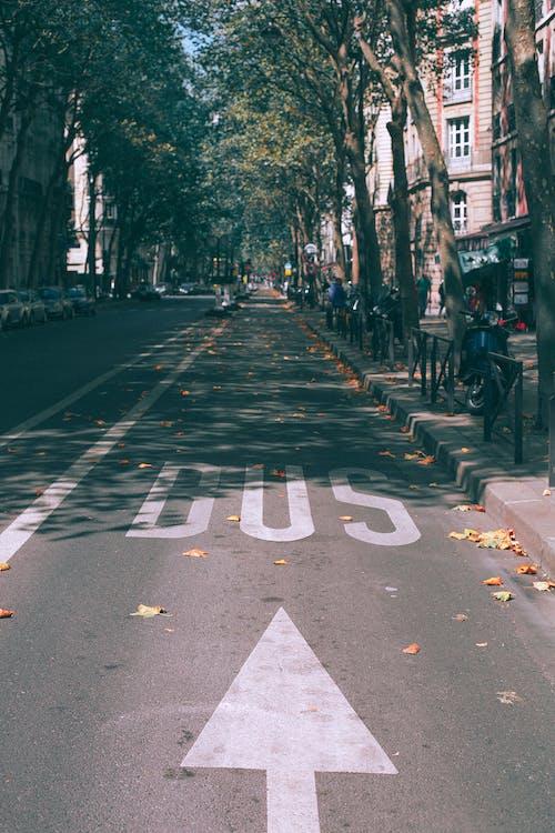 Fotobanka sbezplatnými fotkami na tému architektúra, asfalt, autobus
