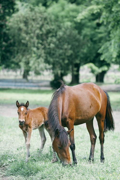 Purebred stallion feeding on meadow near foal against tree in countryside on summer day