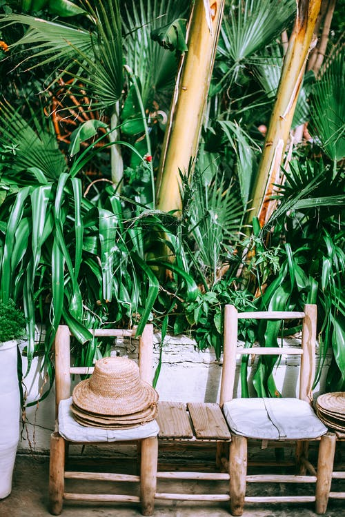 Aged wooden chairs with pile of straw hats near shiny bright exotic plants on summer day