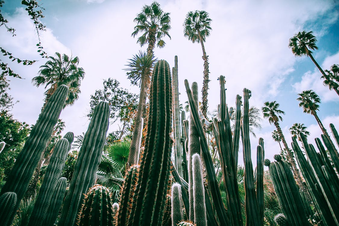 Low angle of different green prickly cacti with thick ribbed stems growing in botanical garden in daylight