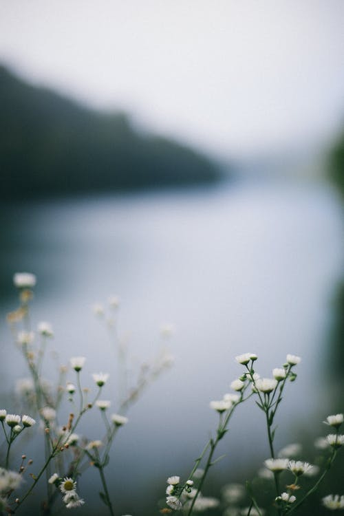 Blooming flowers with pleasant scent growing on thin stalks against lake and mountain in daytime