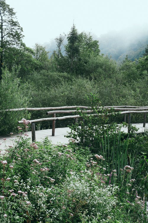 Wooden footbridge in lush green nature