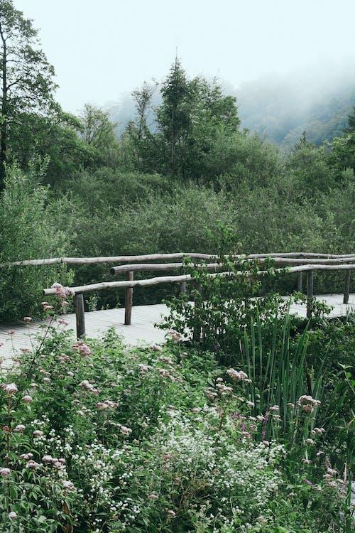 Passerella In Legno Nella Lussureggiante Natura Verde