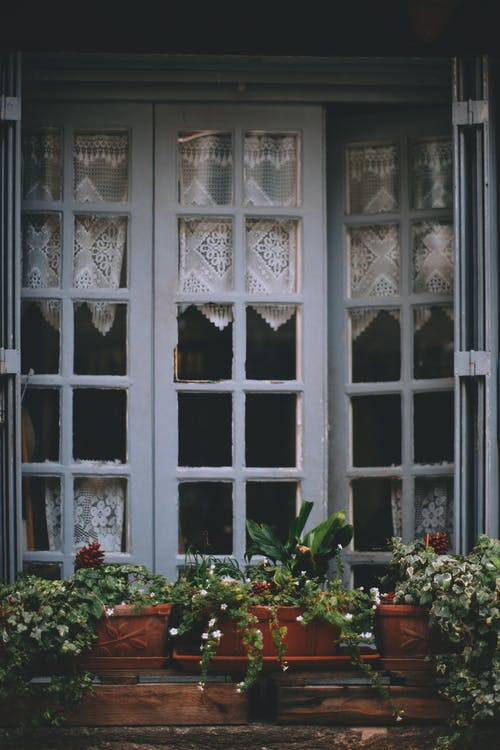 From outside rustic house window with white frames and curtain decorated with tender potted plants
