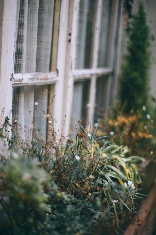 破舊的房子窗戶裝飾著盆栽的植物