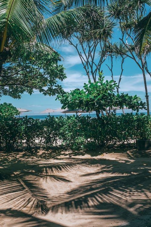 Tropischer Ferienort Mit Grünen Bäumen Gegen Meer Im Sommer