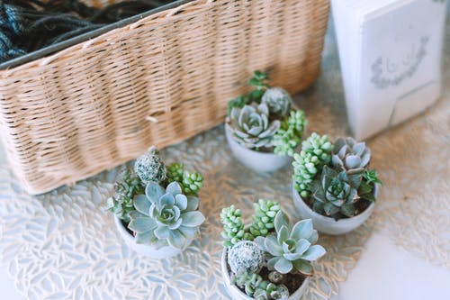 Collection of green succulent plants in pots