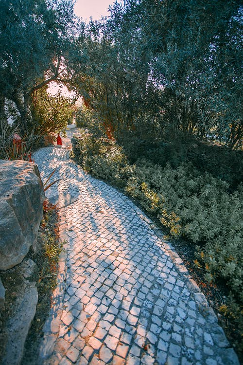 Scenic view of empty cobblestone walkway between lush trees and plants in city park in sunlight