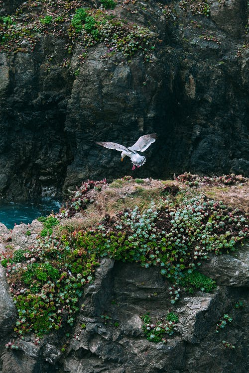 Seagull flying over rocky cliff with plants