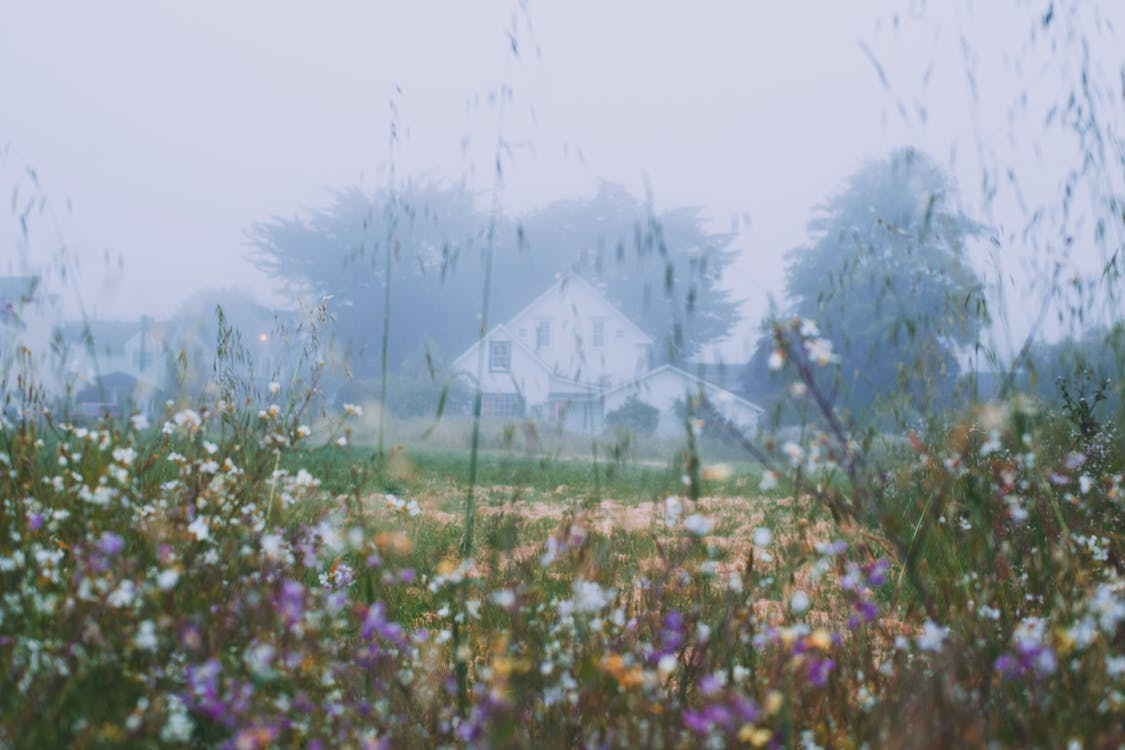 Rural house behind blossoming flowers growing on grassy meadow in early foggy morning