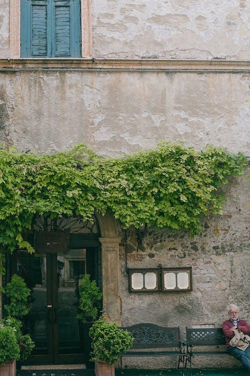 Building facade with green plants above entrance