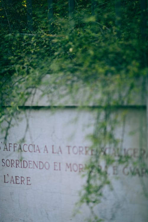 Green plants growing on white stone surface with foreign language on it and placed outside
