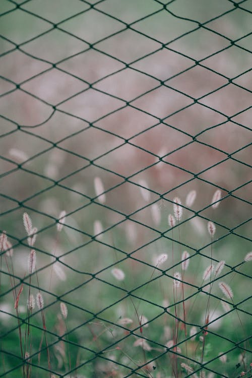Barbed fence with green grass on background