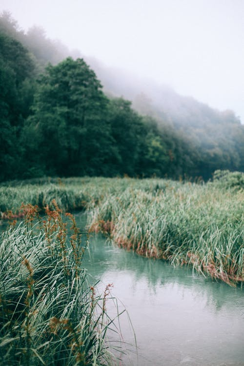 Narrow river between meadows with trees on foggy day