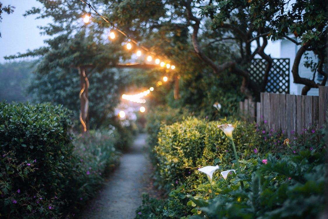Scenic view of narrow pathway between green bushes under garland illuminating garden in evening