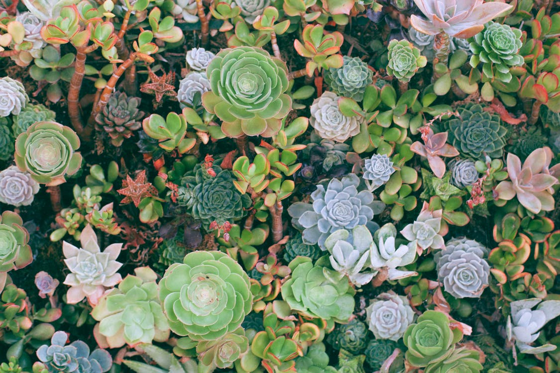 Overhead view of textured background of colorful different green plants with thick leaves growing on summer day