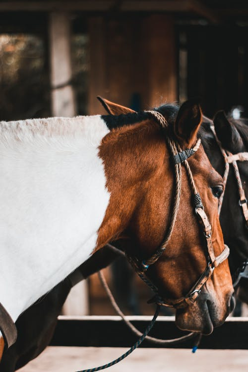Free stock photo of black horse, brown horse, clotheshorse, horse