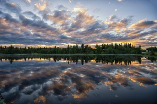 Photos gratuites de arbre, aube, coucher de soleil, coucher du soleil