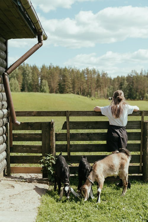 Woman in White Long Sleeve Shirt and Black Pants Standing Beside Brown Wooden Fence