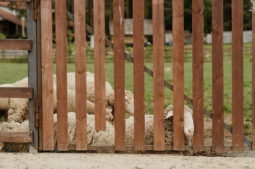 Brown Wooden Fence on Gray Sand