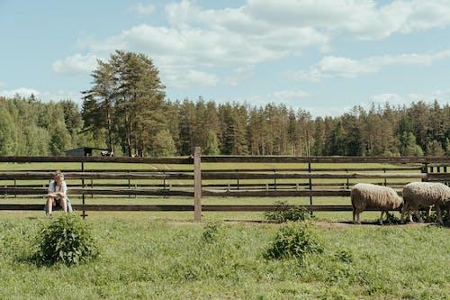 Brown Sheep on Green Grass Field