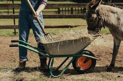 Free stock photo of agriculture, barnyard, denim