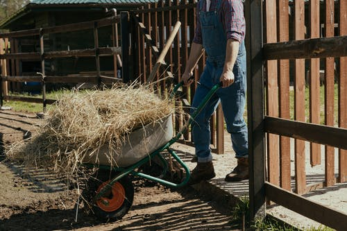 Man in Blue Denim Jeans and Blue Shirt Holding Brown Wooden Wheel Barrow
