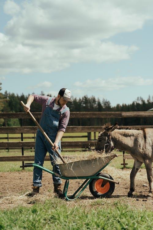 Δωρεάν στοκ φωτογραφιών με barnyard, denim, αγρόκτημα