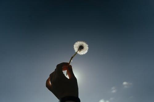 Person Holding White Dandelion Under Blue Sky